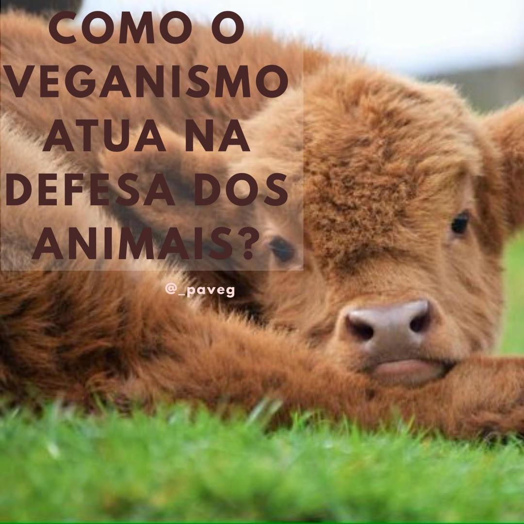 Como o Veganismo Atua na Defesa dos Animais?